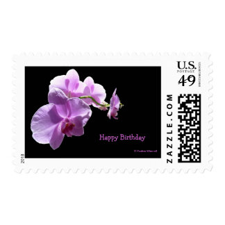 © P Wherrell Pink orchid on black background Postage Stamps