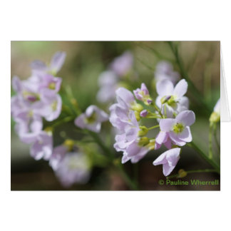 © P Wherrell Pretty flowers Lady's smock photo Card
