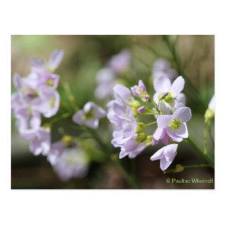 © P Wherrell Pretty flowers Lady's smock photo Postcard