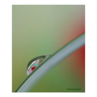 © P Wherrell Red rose refraction fine art photo Posters