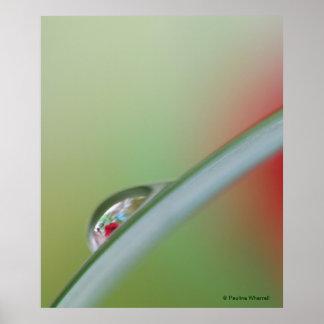 © P Wherrell Red rose refraction fine art photo Poster