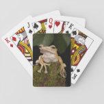 PA central, los E.E.U.U.. Rana espigada de Borneo; Cartas De Póquer
