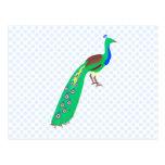 Paavo Peacock Post Card