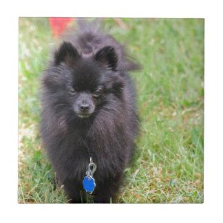 Pablo el Pomeranian Azulejo Cuadrado Pequeño