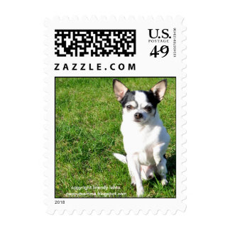 Pablo the Chihuahua Postage Stamp