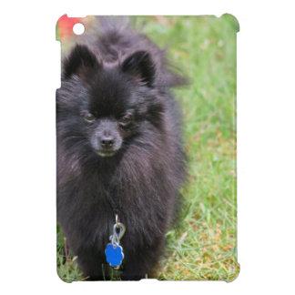 Pablo the Pomeranian Cover For The iPad Mini