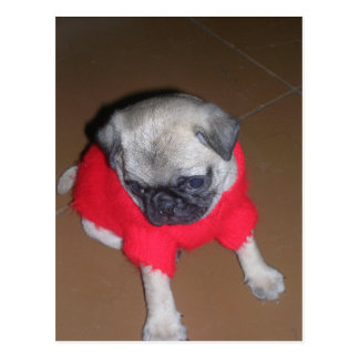 Pablo_the_pug puppy_in_a_red_sweater.png postcard