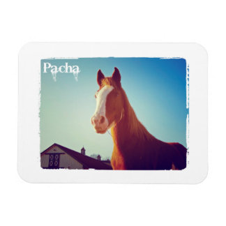 Pacha Deluxe Edition Magnet
