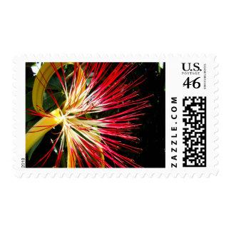 Pachira Aquatica Medium Stamp