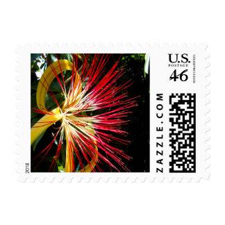 Pachira Aquatica Small Stamp