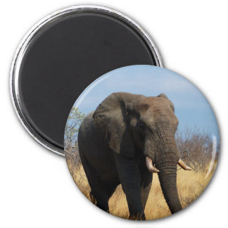 Pachyderm Magnet Magnets
