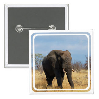 Pachyderm Square Pin