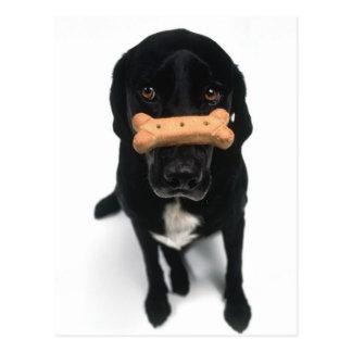 Pacientemente esperar una galleta de perro postales