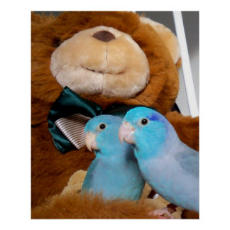 Pacific Blue Parrotlets Teddy Bear Nursery Poster