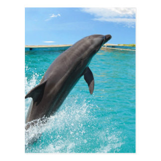 Pacific Bottlenose Dolphin Postcard