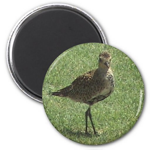 Pacific Golden-Plover Magnet