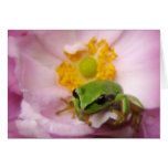 Pacific Green Tree Frog on Japanese Anemone Cards
