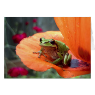 Pacific Green Tree Frog on Orange Poppy Note Card
