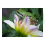 Pacific Green Tree Frog on Purple Dahlia Note Card