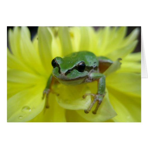 Pacific Green Tree Frog on Yellow Dahlia Note Card