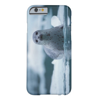 pacific harbor seal, Phoca vitulina richardsi Barely There iPhone 6 Case