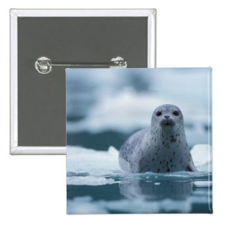 pacific harbor seal, Phoca vitulina richardsi Button