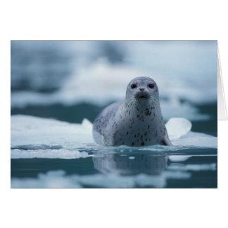 pacific harbor seal, Phoca vitulina richardsi Card