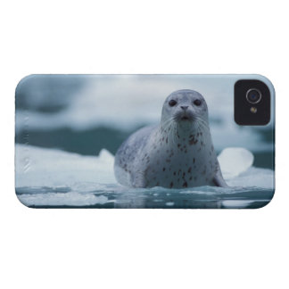 pacific harbor seal, Phoca vitulina richardsi iPhone 4 Cover