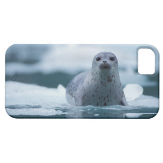pacific harbor seal, Phoca vitulina richardsi iPhone SE/5/5s Case