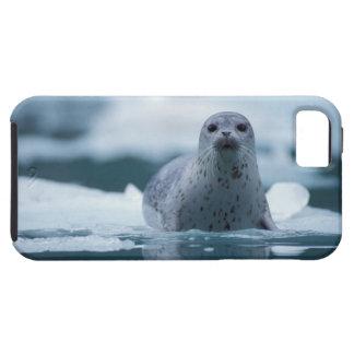 pacific harbor seal, Phoca vitulina richardsi iPhone SE/5/5s Case