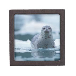 pacific harbor seal, Phoca vitulina richardsi Keepsake Box