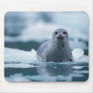 pacific harbor seal, Phoca vitulina richardsi Mouse Pad