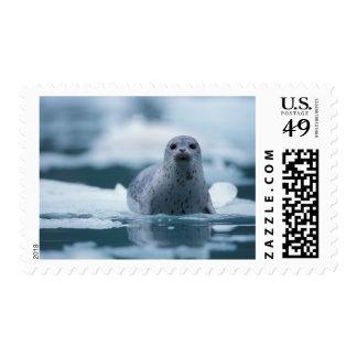 pacific harbor seal, Phoca vitulina richardsi Stamp