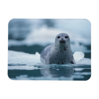 pacific harbor seal, Phoca vitulina richardsi Rectangular Photo Magnet