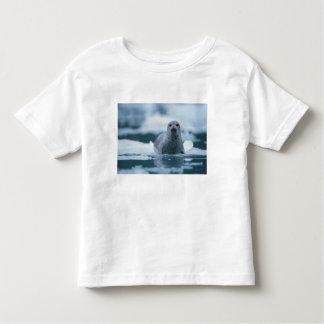 pacific harbor seal, Phoca vitulina richardsi Shirts
