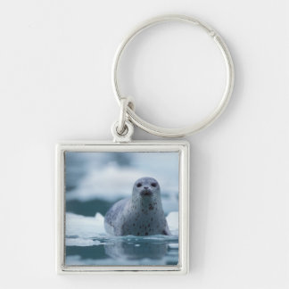 pacific harbor seal, Phoca vitulina richardsi Silver-Colored Square Keychain