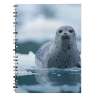 pacific harbor seal, Phoca vitulina richardsi Spiral Notebook
