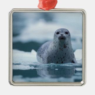 pacific harbor seal, Phoca vitulina richardsi Square Metal Christmas Ornament
