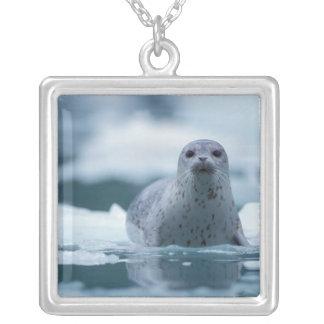 pacific harbor seal, Phoca vitulina richardsi Square Pendant Necklace