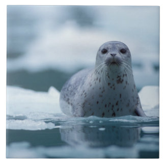 pacific harbor seal, Phoca vitulina richardsi Tile