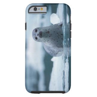 pacific harbor seal, Phoca vitulina richardsi Tough iPhone 6 Case