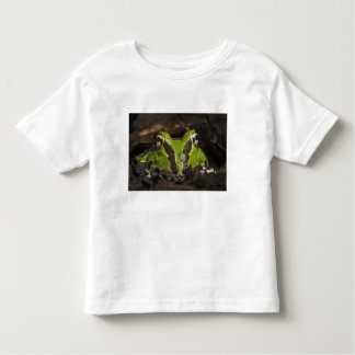 Pacific Horned Frog Ceratophrys stolzmanni) 2 T-shirts