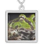 Pacific Horned Frog Ceratophrys stolzmanni) Pendants