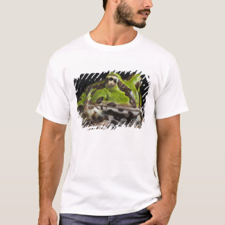 Pacific Horned Frog Ceratophrys stolzmanni) T-Shirt