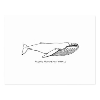 Pacific Humpback Whale Postcard