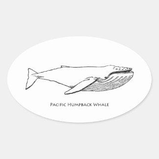 Pacific Humpback Whale Sticker