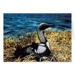 Pacific Loon Card