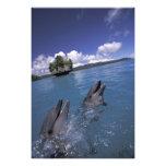 Pacific, Micronesia, Palau, Bottlenose 2 Photo Print