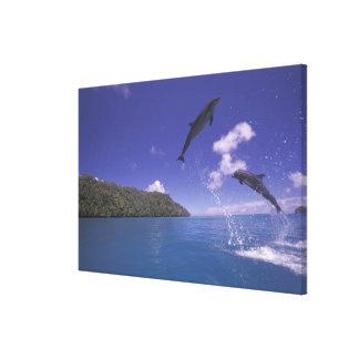 Pacific, Micronesia, Palau, Bottlenose 3 Canvas Prints