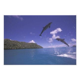 Pacific, Micronesia, Palau, Bottlenose 3 Photo Print